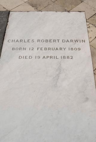 17OCTWMA09 Darwin-grave