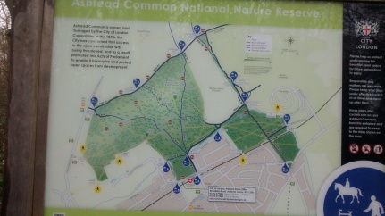 4Feb19 Walk2 Map